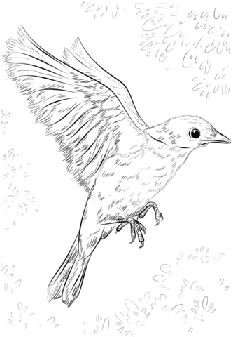 Birds - Free printable Coloring pages for kids   480x333