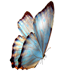Butterfly Transparent Background - Blue Butterfly transparent background