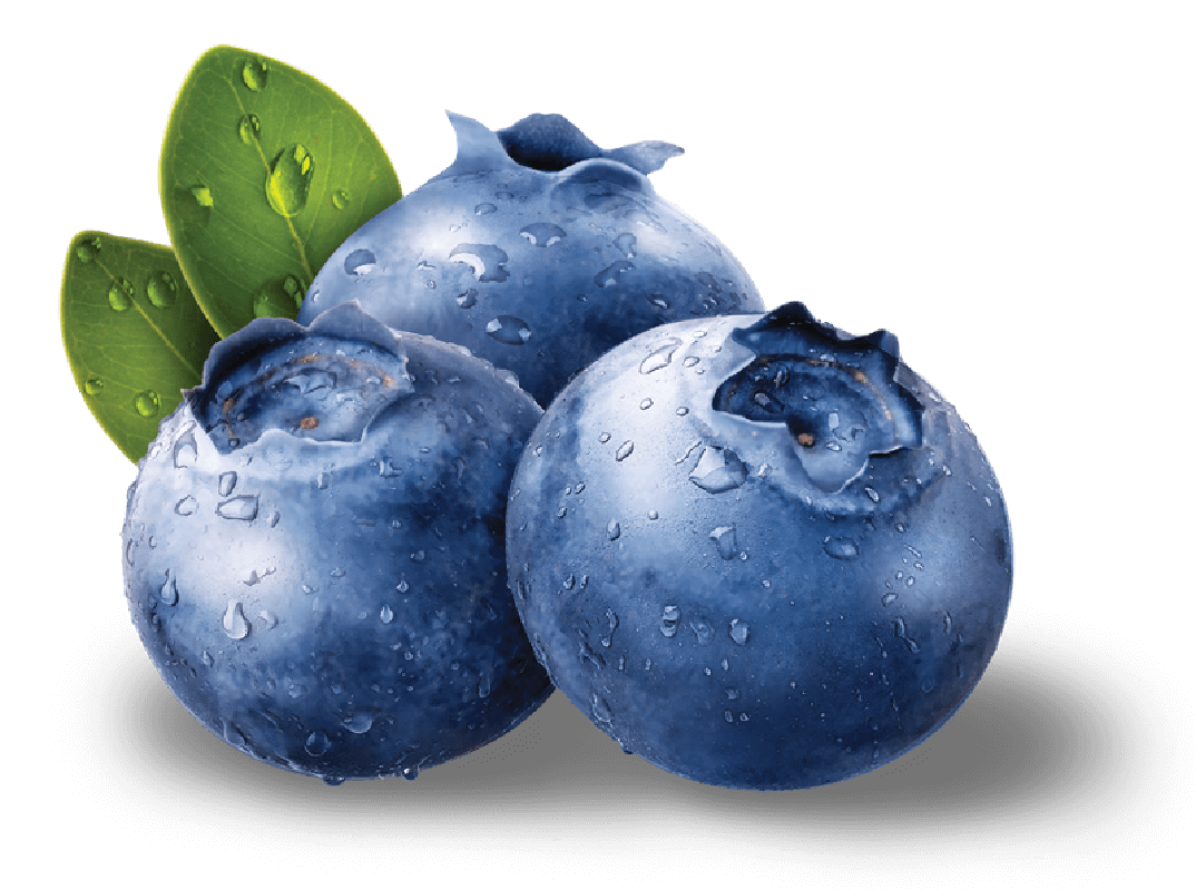 Blueberry Png - Blueberry PNG HD Image   PNG All