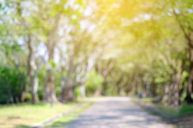 Nature Background - Blurred park with bokeh light, nature background Photo | Premium ...