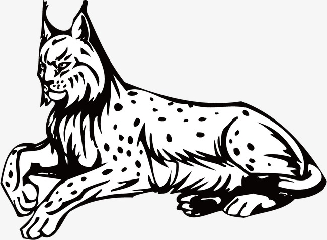 Bobcat Png Black And White - Bobcats, Line Drawing, Black And White, Line PNG Image and Clipart ...