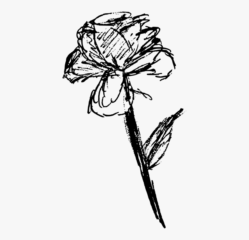 Rose Sketch Png - Botany,plant,flower - Free Rose Sketch Png, Transparent Png - kindpng