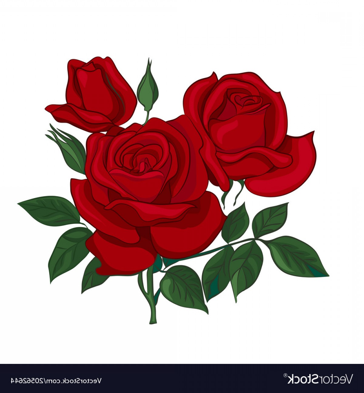 Rose Vector Png - Bouquet Of Red Roses Vector   CQRecords