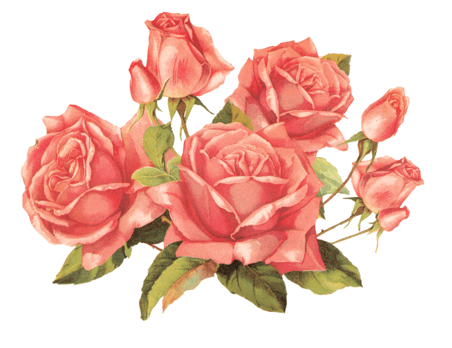 Victorian Rose Png - Bouquet Of Vintage Roses transparent PNG - StickPNG
