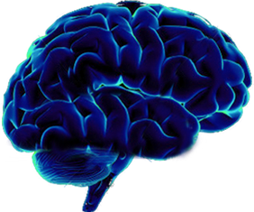 Mind Png - brain png