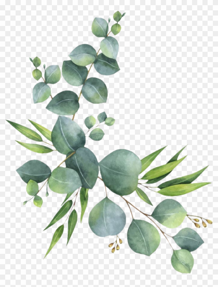Eucalyptus Leaves Png - branch #leaves #florals #branches #zweig #watercolor - Eucalyptus ...