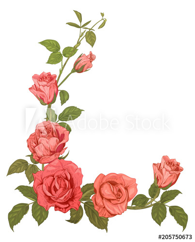 Red Flower Drawing - Branches pink roses, bouquet with pink, red flowers, buds, green ...