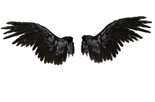 Broken Heart With Wings, HD Png Download - kindpng