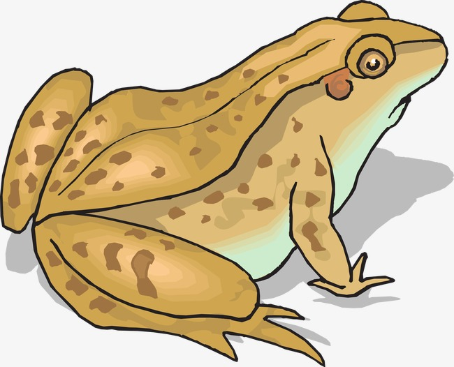 Brown Frog Png - brown frog, Frog Clipart, Brown, Spot PNG Image and Clipart