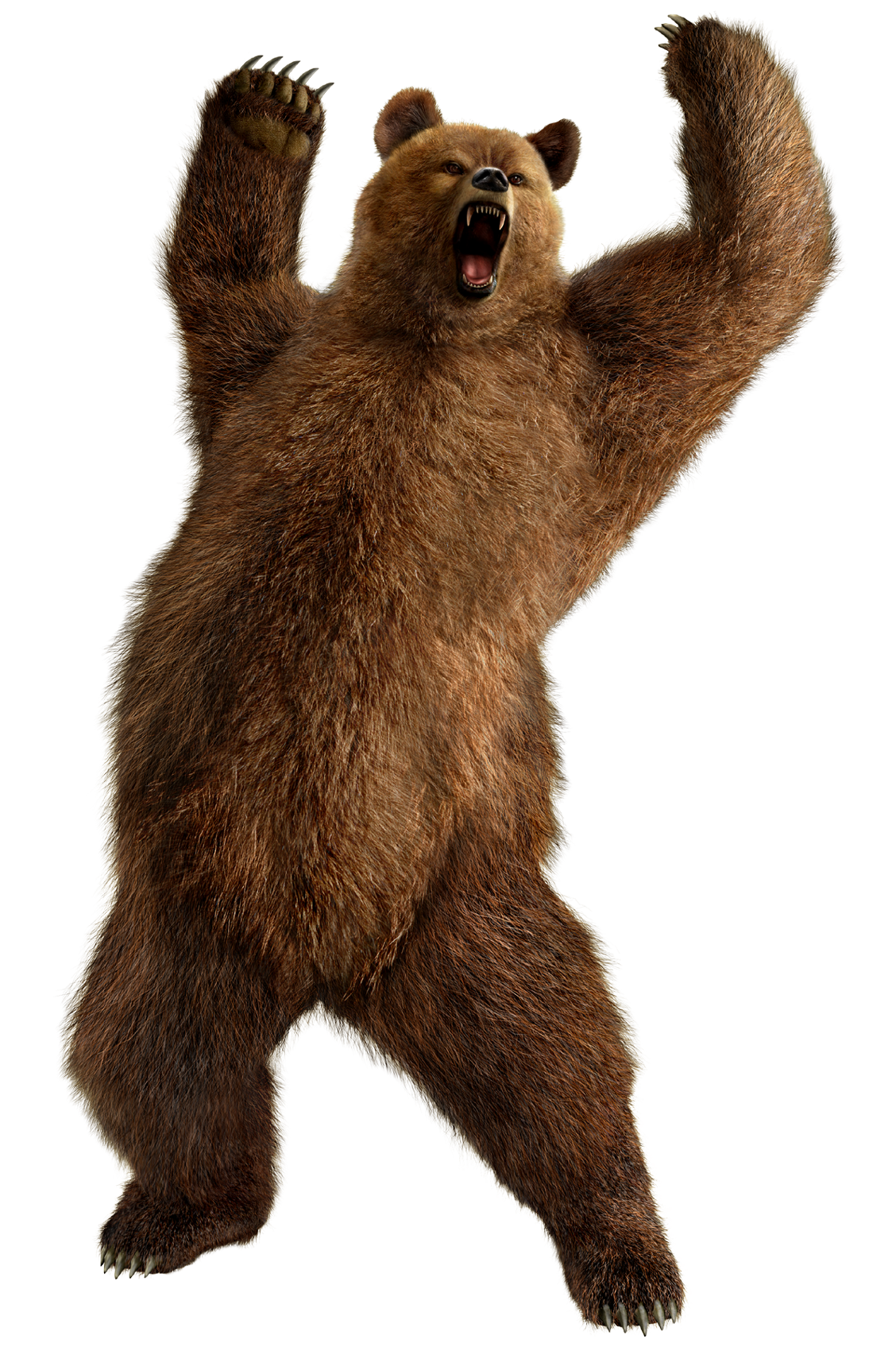 Bear Png - brown greezly bear PNG image