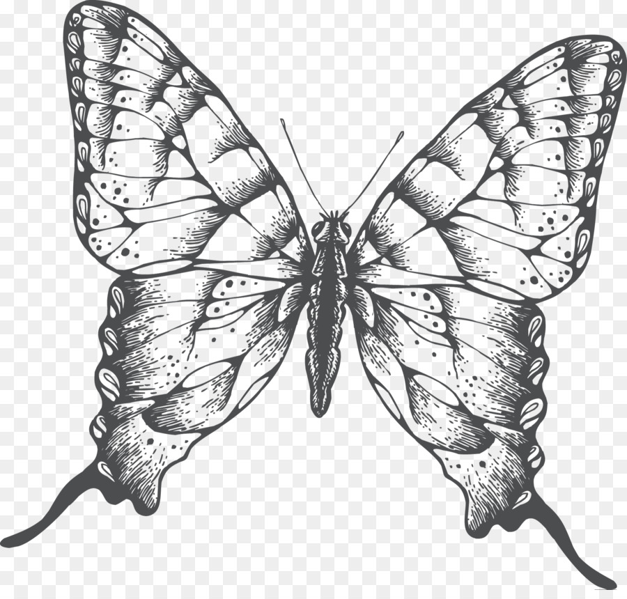 butterfly drawing easy methods how to draw butterflies - 900×860