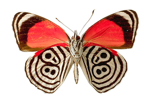 Butterfly Png - Butterfly PNG image
