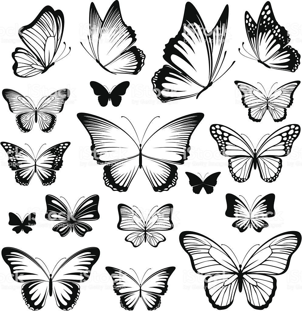 Butterfly Vector - Butterfly Vector Silhouettes Stock Illustration - Download Image ...
