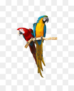 Caique Png - Caique png free download - Christmas Tree Branch - bird