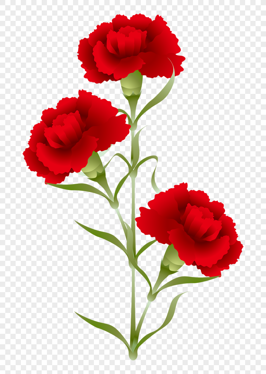 Carnation Png 94 Images In Collection 547508 Png