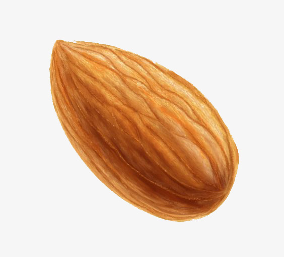 Almond Png - cartoon almond, Hand Painted Almond, Almond Illustration, Dessert PNG Image  and Clipart