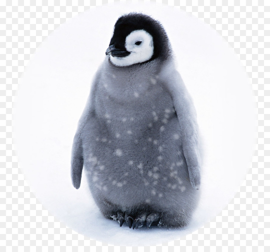 Baby Penguins Name - Mother Penguin Clipart Png Transparent Png (#552957) -  PinClipart