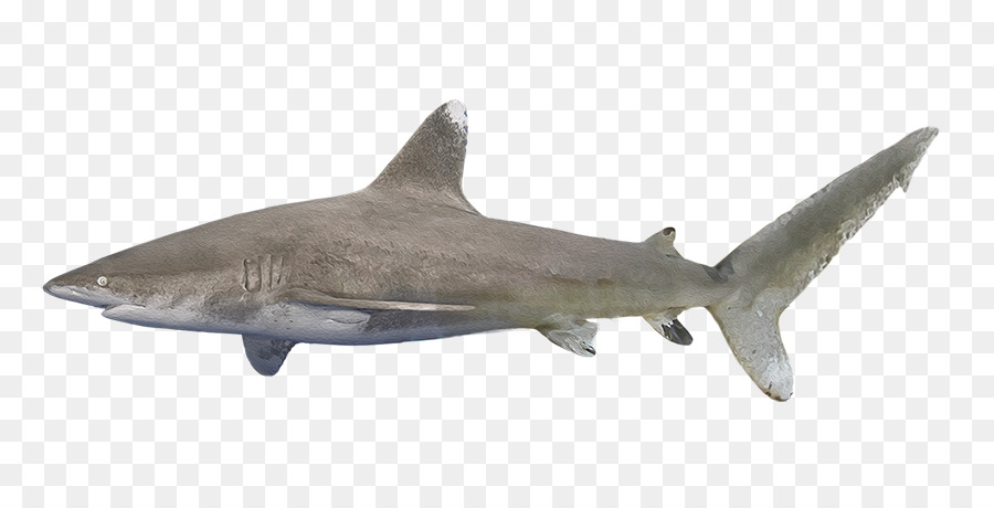 Requiem Shark Png - Cartoon Shark png download - 850*445 - Free Transparent Requiem ...