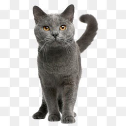 Cat Png - cat, Kitty, Creative Cat, Cat PNG Image and Clipart