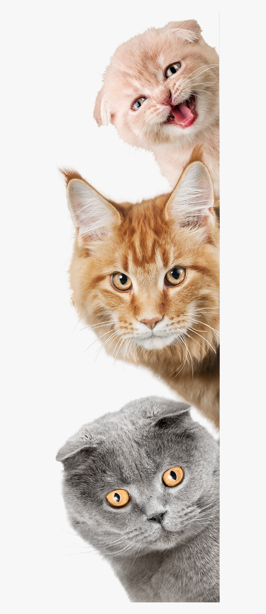 Cat Laying Down Png Cat And Dog Wallpa 1299608 Png Images Pngio