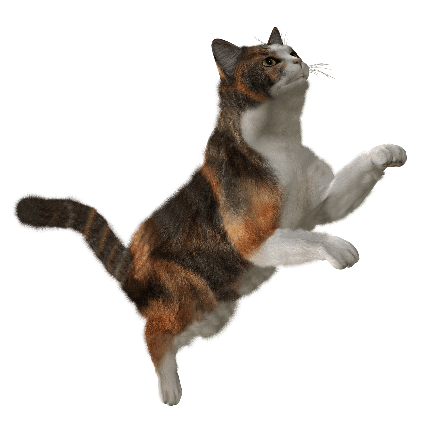 Cat Png - Cat Png Image Download Picture Kitten PNG Image