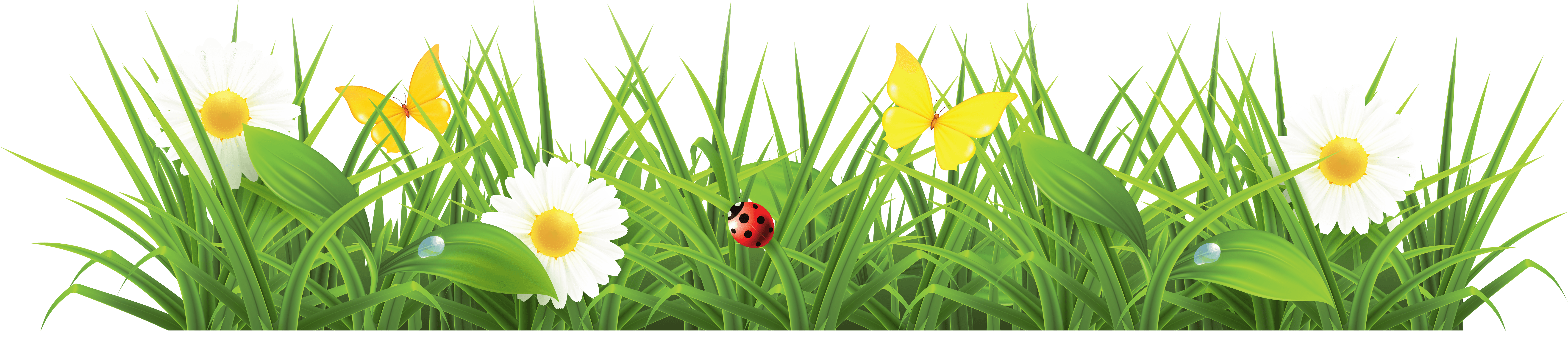 Grass Png & Free Grass png Transparent Images #222 - PNGio