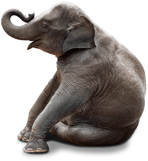Baby Elephant Sitting Png Free Baby Elephant Sitting Png Transparent Images 148498 Pngio The pnghost database contains over 22 million free to download transparent png images. baby elephant sitting png transparent