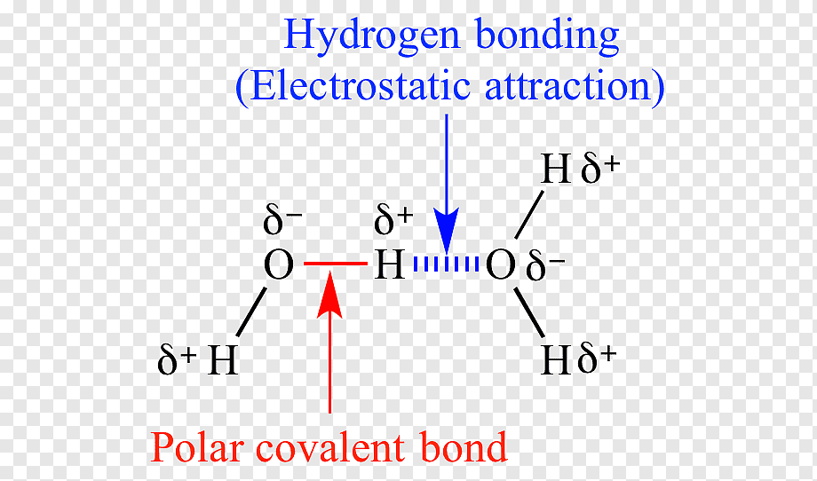 Chemical Polarity Png - Chemical polarity Organic chemistry Molecule Covalent bond ...