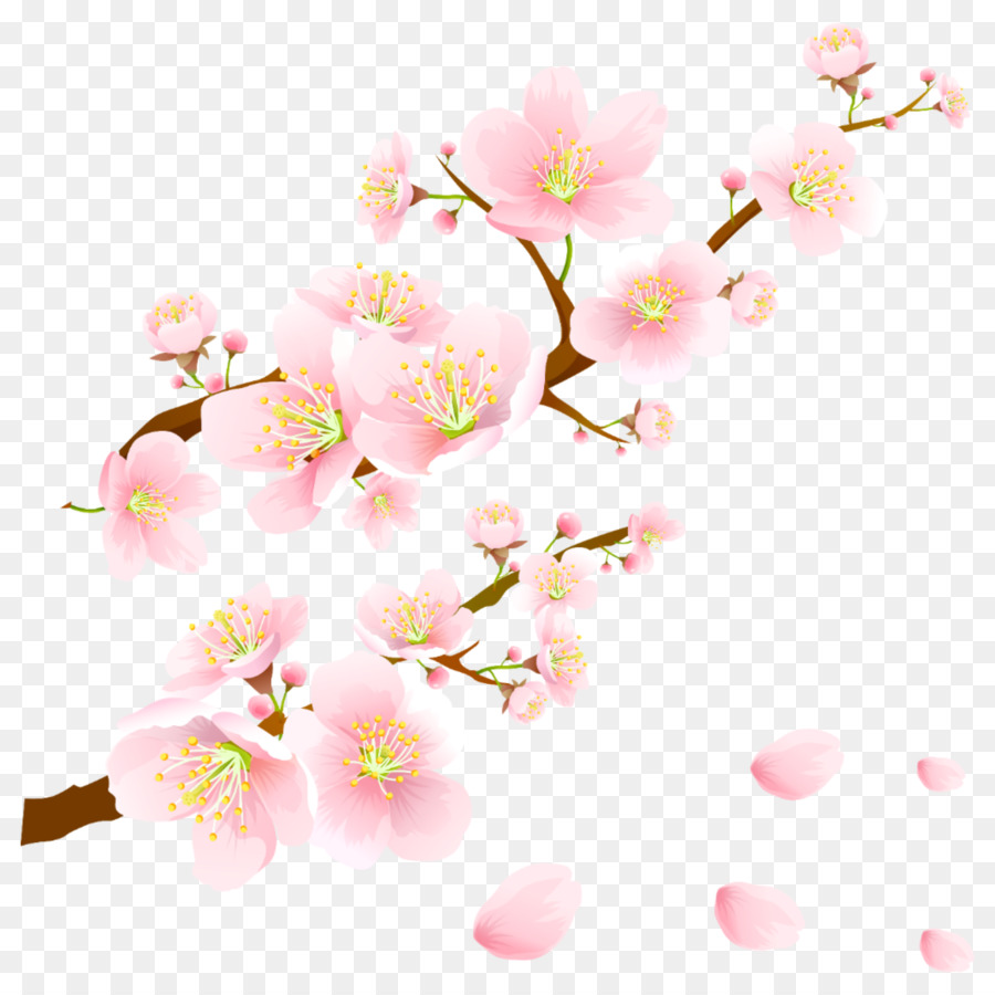 Graham  Brown Cherry Blossom Wallpaper Png - Cherry Blossom Flower png download - 1773*1773 - Free Transparent ...