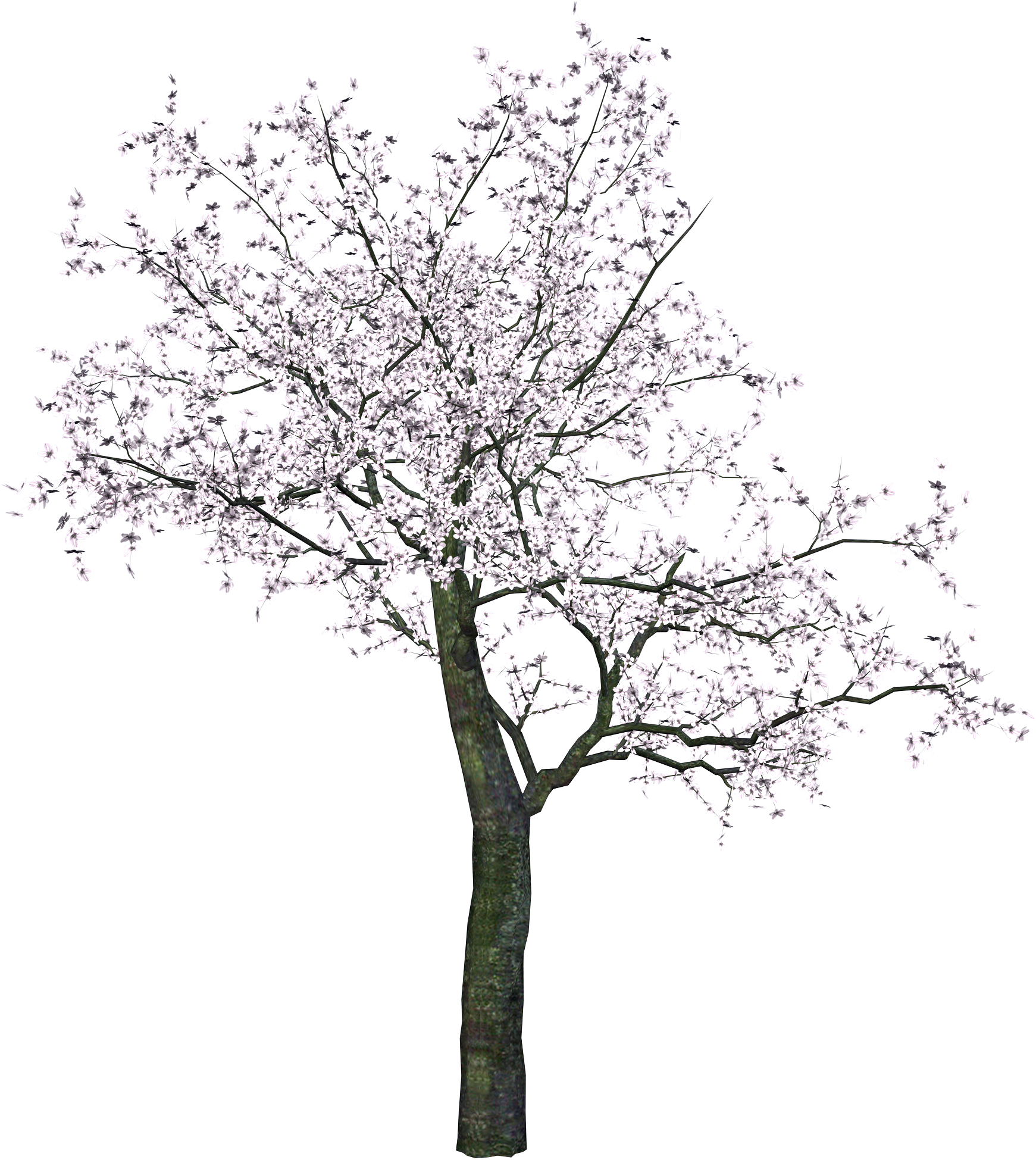 Cherry Blossom Tree Black And White: Cherry Blossom Tree Png Black And White & Free Cherry