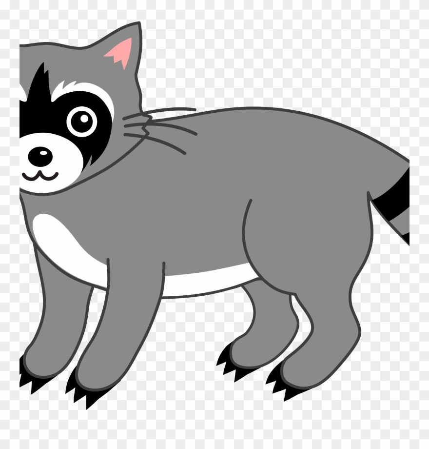 Raccoon Coloring Pages Png Free Raccoon Coloring Pages Png Transparent Images 100390 Pngio