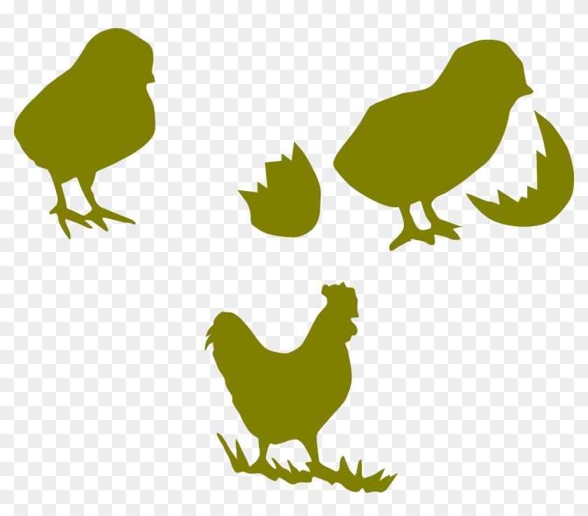 Chicken Png Outline - Chicken Cock Poultry Hen Png Image - Outline Chickens Clipart Png