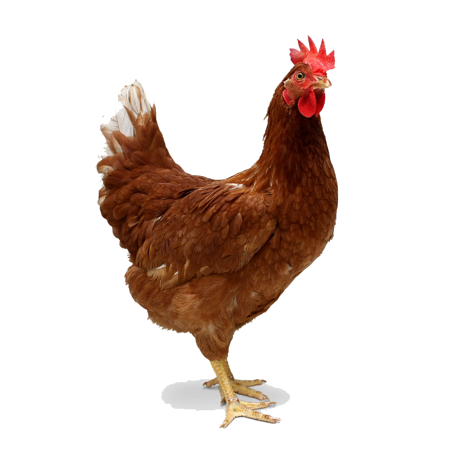 Chicken Png - Chicken Transparent PNG