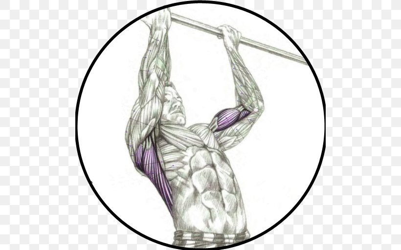 Chinup Png - Chin-up Pull-up Muscle Exercise, PNG, 512x512px, Chinup, Anatomy ...
