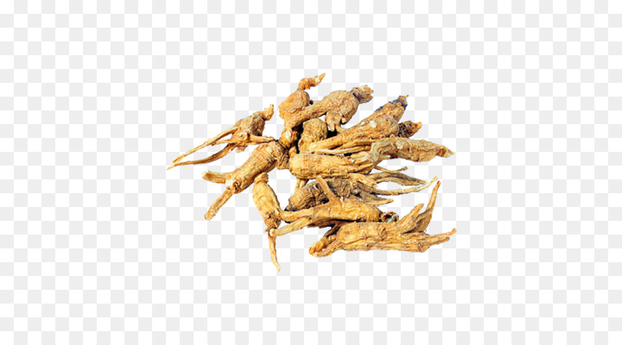 Female Ginseng Png - Chinese Food png download - 500*500 - Free Transparent Female ...