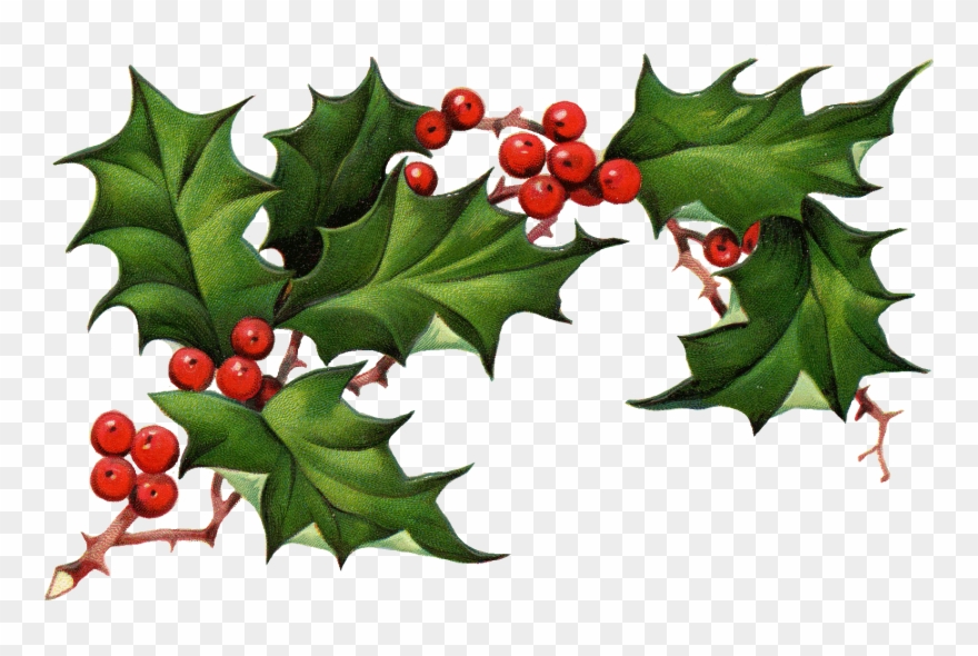 Vintage Christmas Holly Png - Christmas Holly Png Christmas Clipart Holly The Best - Christmas ...