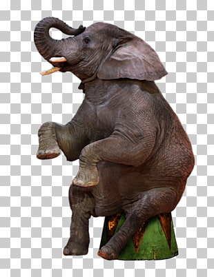 Circus Elephant Png 101 Images In Coll 636814 Png Images Pngio Elephant, little elephant, gray elephant illustration, mammal, carnivoran png. circus elephant png 101 images in