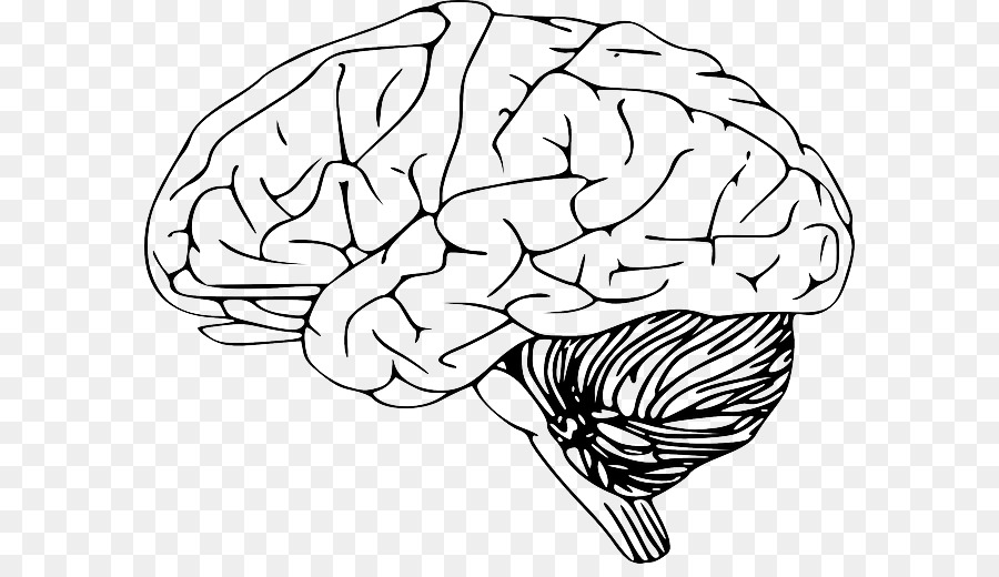 Brain Png Black And White & Free Brain Black And White.png ...
