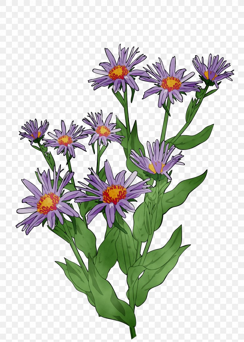 Alpine Aster Png - Clip Art Vector Graphics Image Drawing Openclipart, PNG ...