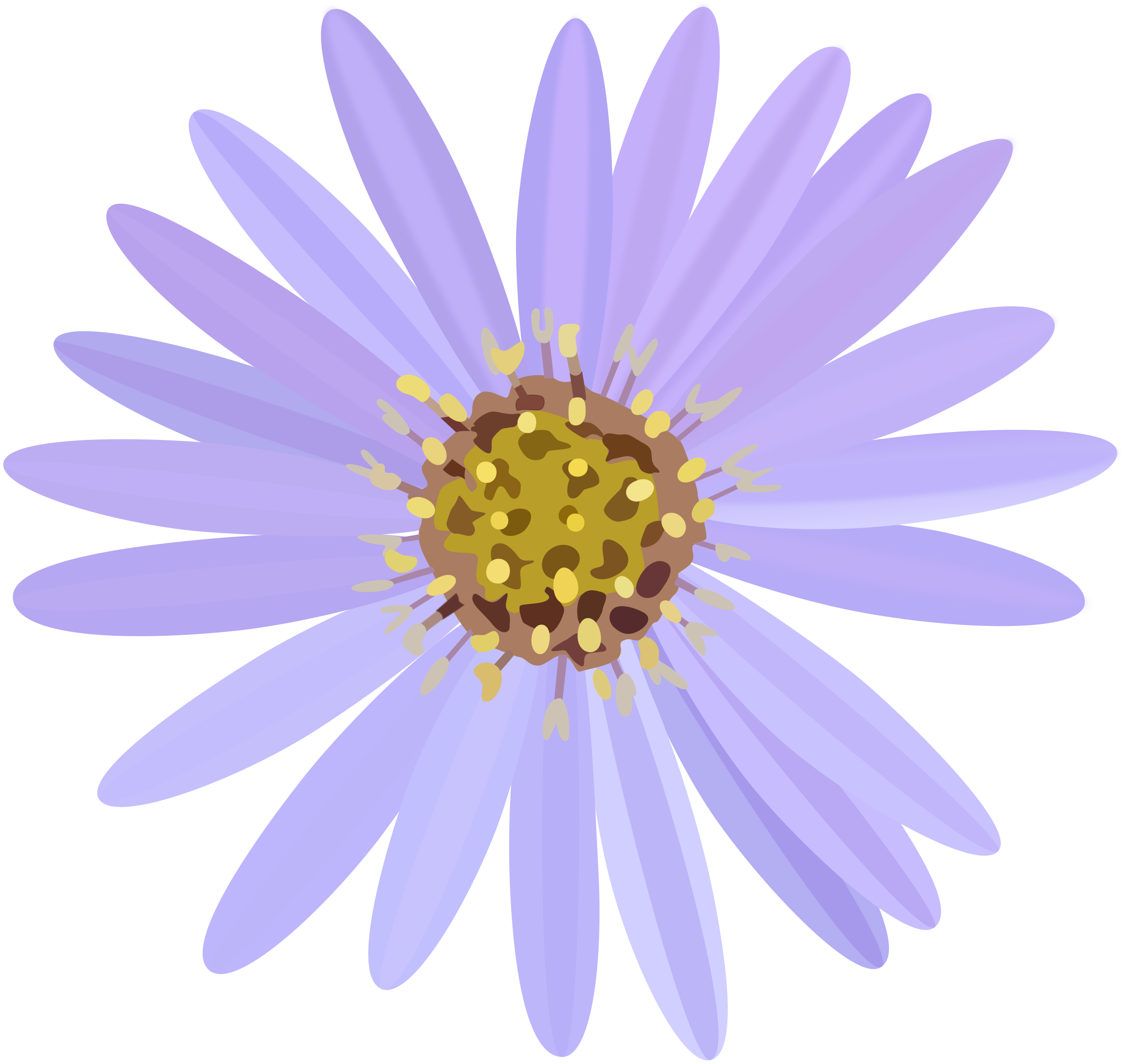 Clipart - Aster Png Royalty Free #86601 - PNG Images - PNGio