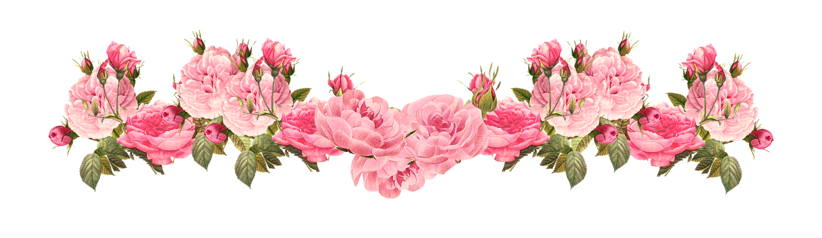 Peony Border Background Png - Clipart borders peony, Clipart borders peony Transparent FREE for ...