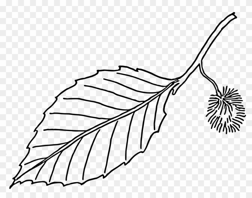 Black And White Png Leaf - Clipart - Leaves - Black - And - White - Beech Leaf Outline - Free ...