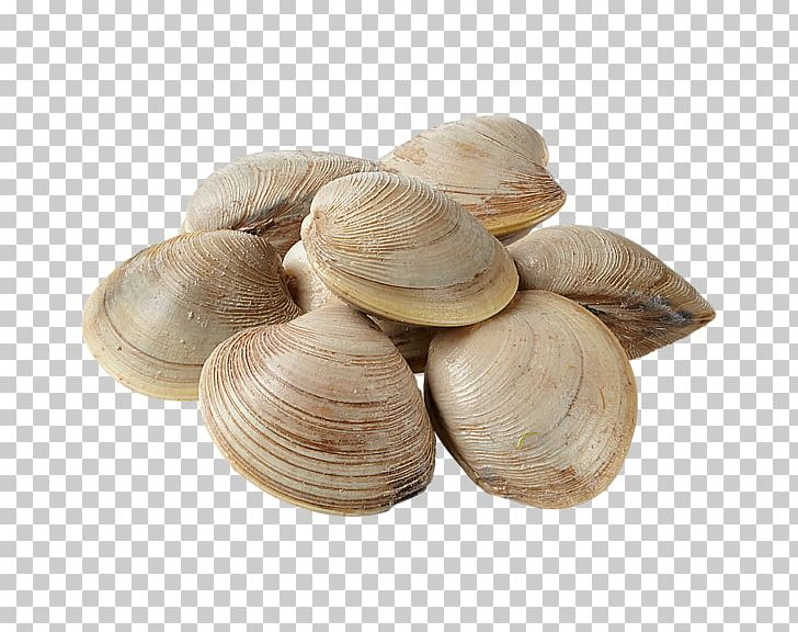 Veneroida Png - Cockle Mussel Clam Oyster Veneroida PNG, Clipart, Animal Source ...