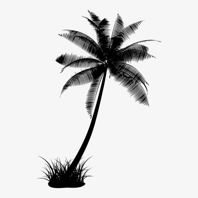Coconut Tree Png Black And White Free Coconut Tree Black And White