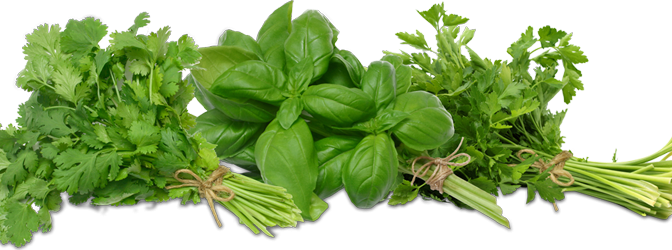 Herb Png - Collection of Herbs Tied in Bundles