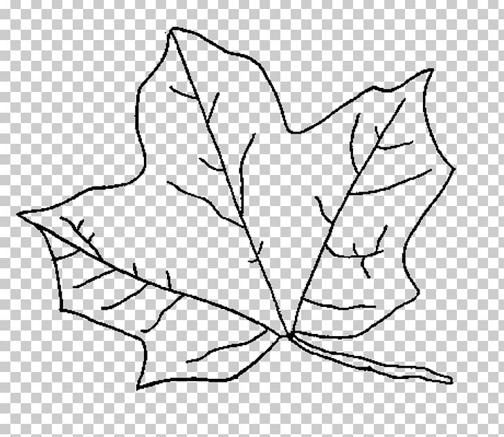 Autumn Leaf Coloring Pages Png Free Autumn Leaf Coloring Pages Png Transparent Images 84748 Pngio