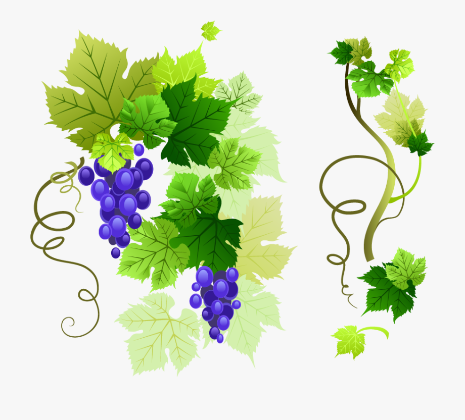 Common Grape Leaves Clip Art Png Vector 1345070 Png Images Pngio