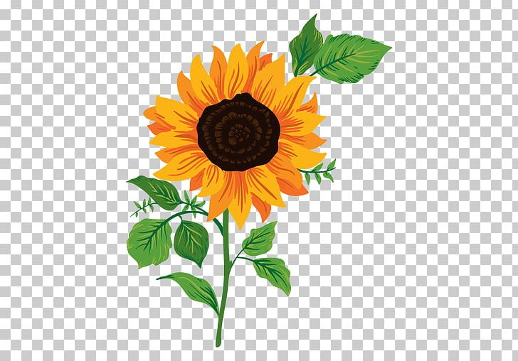 Sunflower Drawing Png - Common Sunflower Drawing PNG, Clipart, Animation, Common Sunflower ...