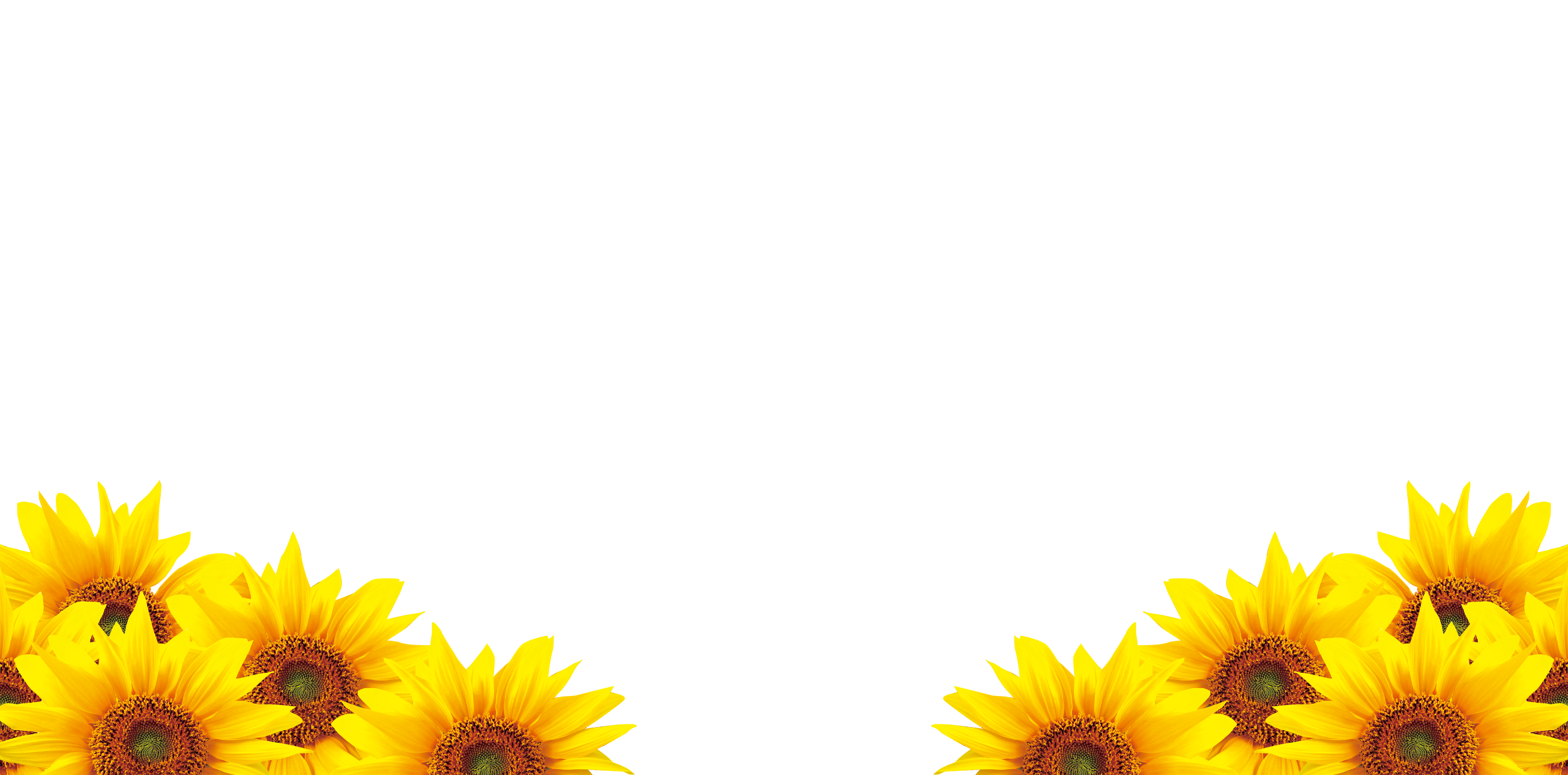 Fall Sunflower Png - Common sunflower Petal Download - sunflower png download - 4724 ...