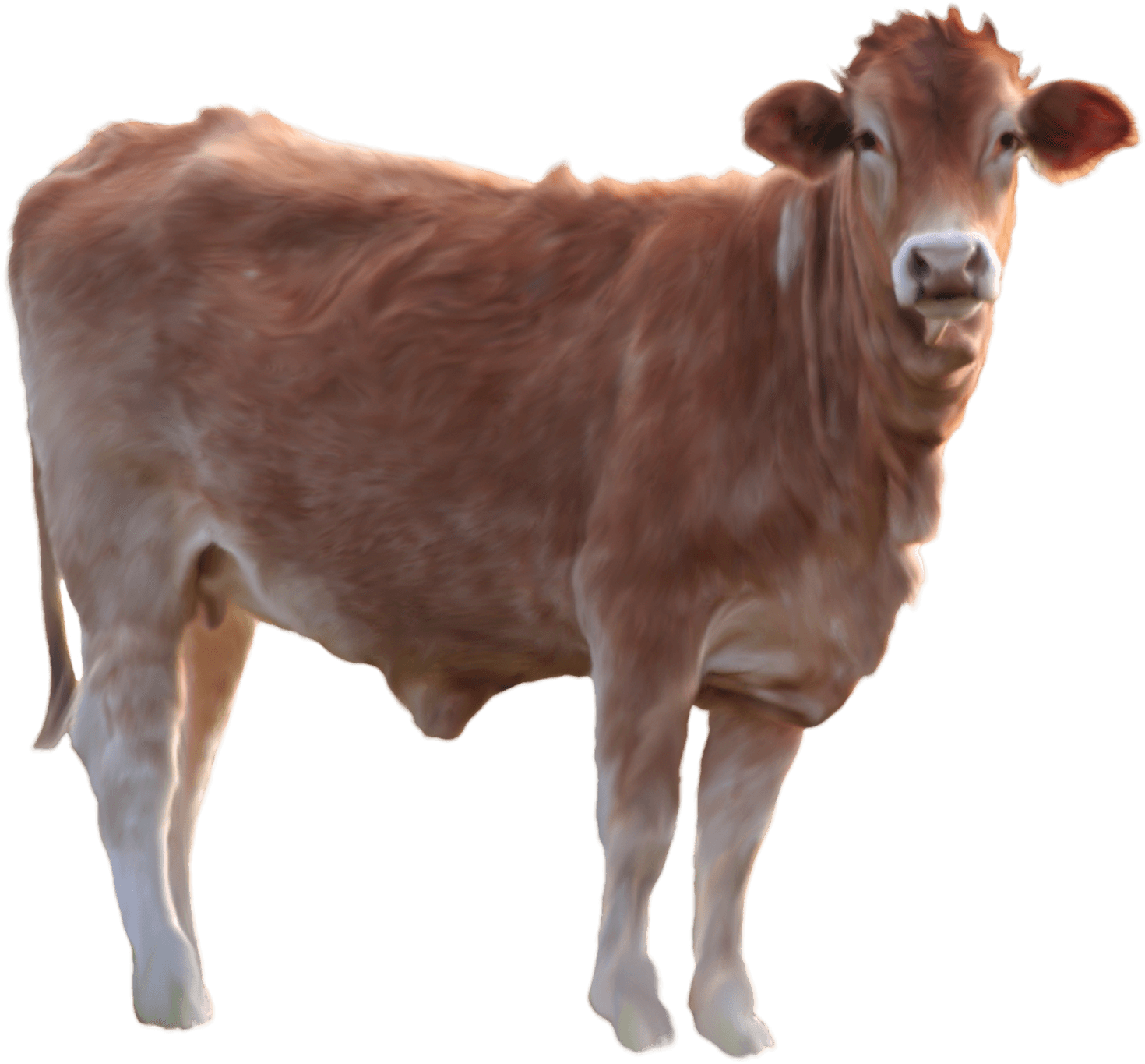 Cow Png - Cow Png Image PNG Image